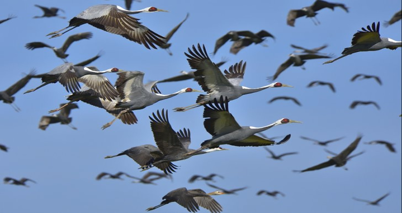 Article: Learning from Migrating Birds – Gilbert Kimeng