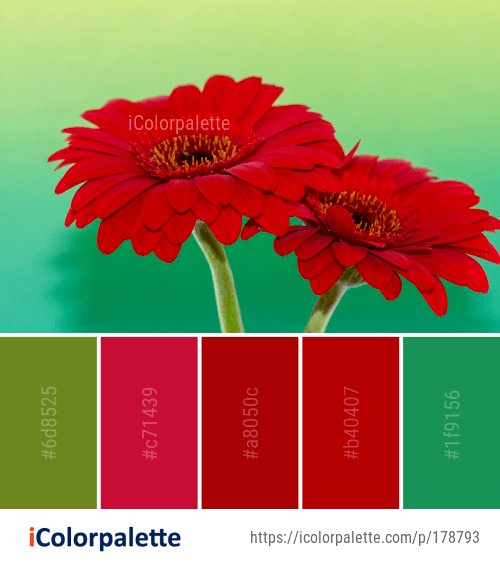 Color Palette Ideas From 658 Daisy Family Images Icolorpalette