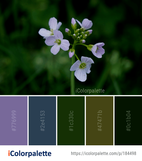 Color Palette ideas from 7789 Flower Images | iColorpalette