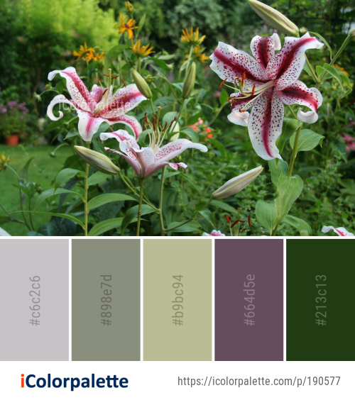 Color Palette Ideas from Plant Flower Lily Image | iColorpalette