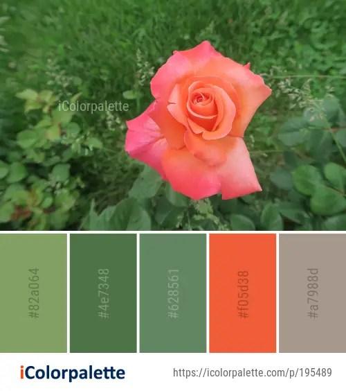 Color Palette ideas from 553 Floribunda Images   iColorpalette