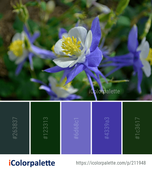 Color palette ideas from 4 colorado blue columbine images collage izmirmasajfo