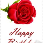 Single Rose Birthday Flowers Single Rose Flower Birthday Flowers Bouquet Happy Birthday Hat Happy Birthday Card Images 359514 Free Icon Library