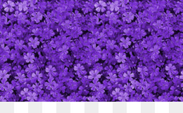 Free download Pink flowers Purple Violet Wallpaper   purple flowers png  Pink flowers Purple Violet Wallpaper   purple flowers