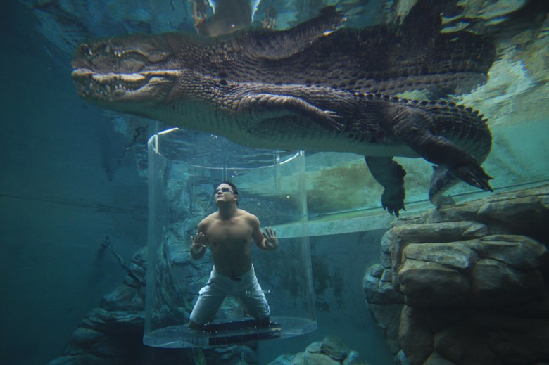 Crocosaurus Cove Cage of Death Australia