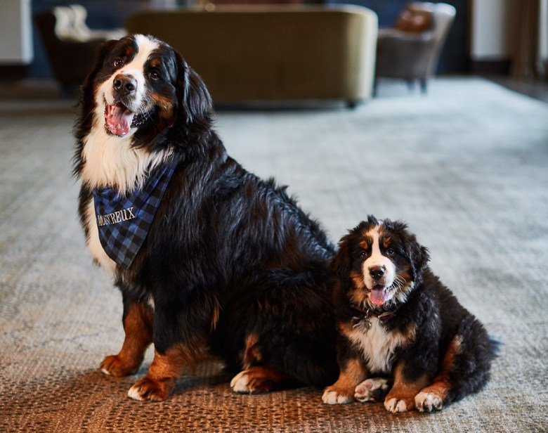 Canine Ambassador program Montage Deer Valley