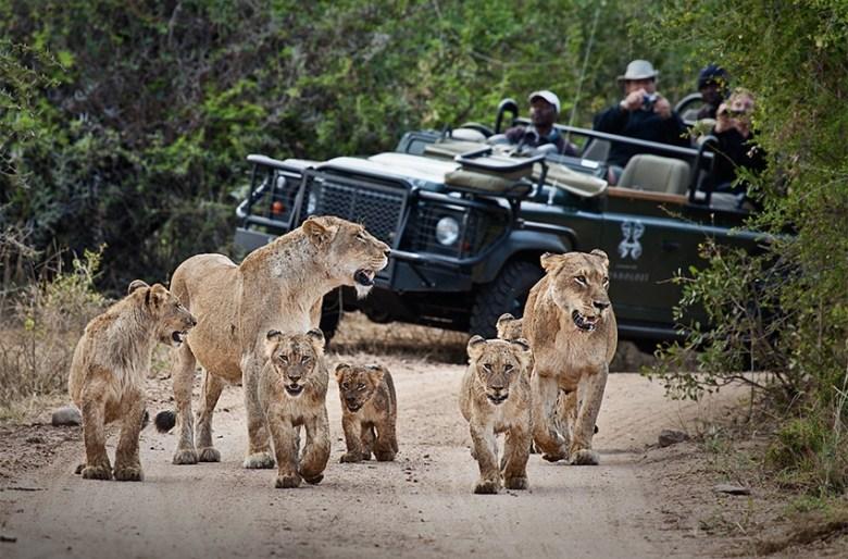 Photography luxury african safari