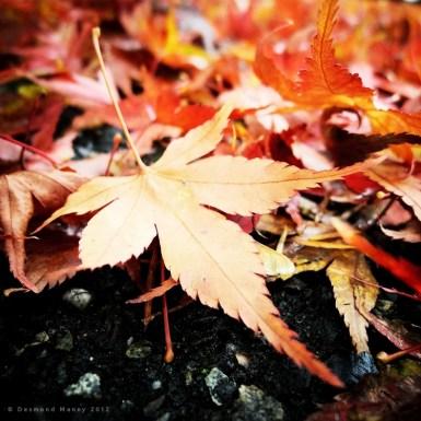 Fallen #3 - November 2012