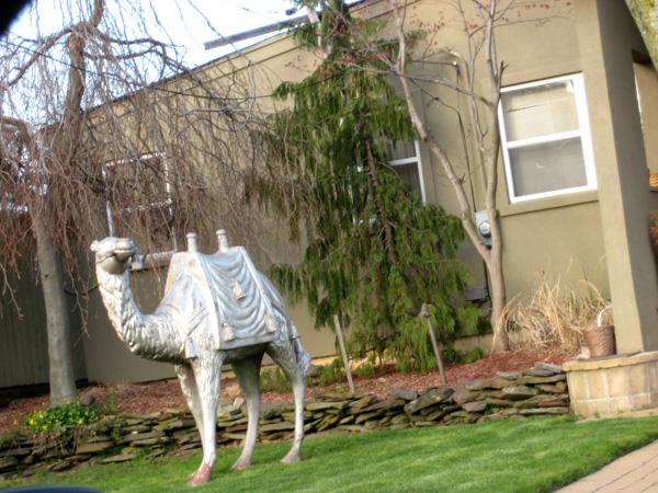 lawn_camel