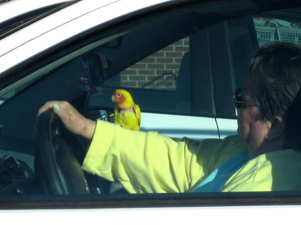 a-bird-in-hand