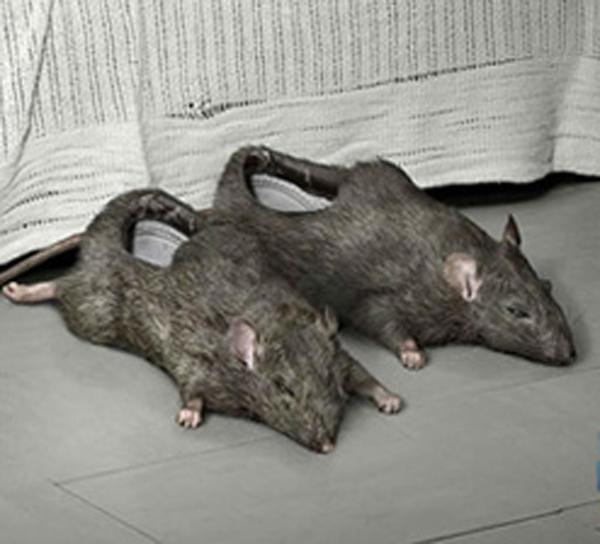 rat-slippers