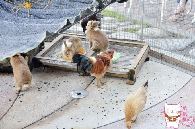 圖片帆帆貓提供