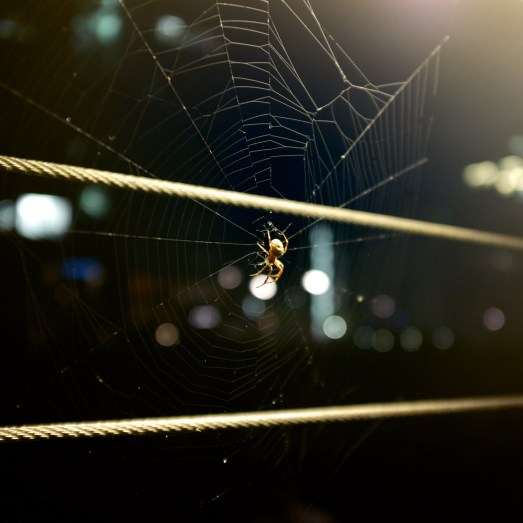 Spider, Spider, Burning Bright