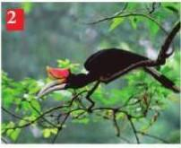 Kunci jawaban kelas 3 sd tema 1 halaman 117 118 119 buku tematik subtema 3. Burung Apa Yang Ada Di Buku Seni Budaya Kelas 7 Kurikulum 2016 Halaman 3 Brainly Co Id