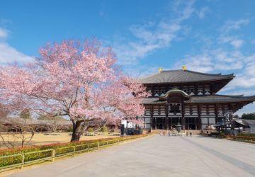 Dimana & Kapan Melihat Sakura: Nara Park, Jepang