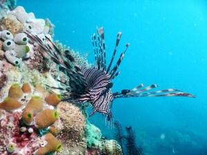 Diving fish 2