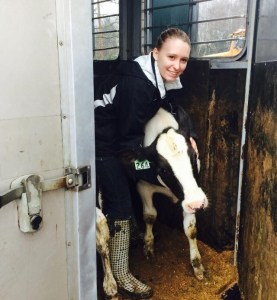 Bailie Welton works with cattle at All West/Select Squires in Washington