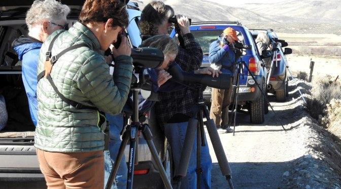 Latest From Idaho Birders