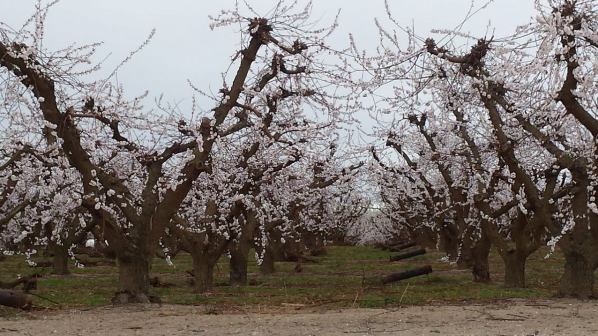 LDS Orchard
