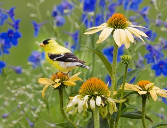Garden Bird Safety