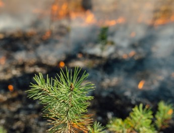Living With Wildfire