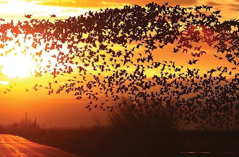 For the Birds: Harney County Migratory Bird Festival