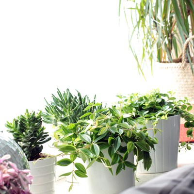 Urban Jungle Bloggers :: Show your plant gang {and the first birthday present}