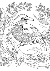 Birds - Free printable Coloring pages for kids0