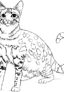 Cats - Free printable Coloring pages for kids13