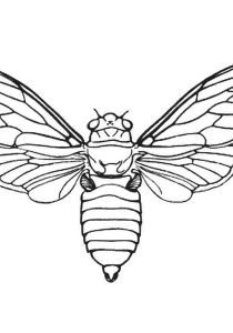 Insects - Free printable Coloring pages for kids2