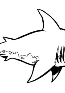 Sharks - Free printable Coloring pages for kids16