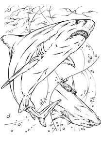 Sharks - Free printable Coloring pages for kids19