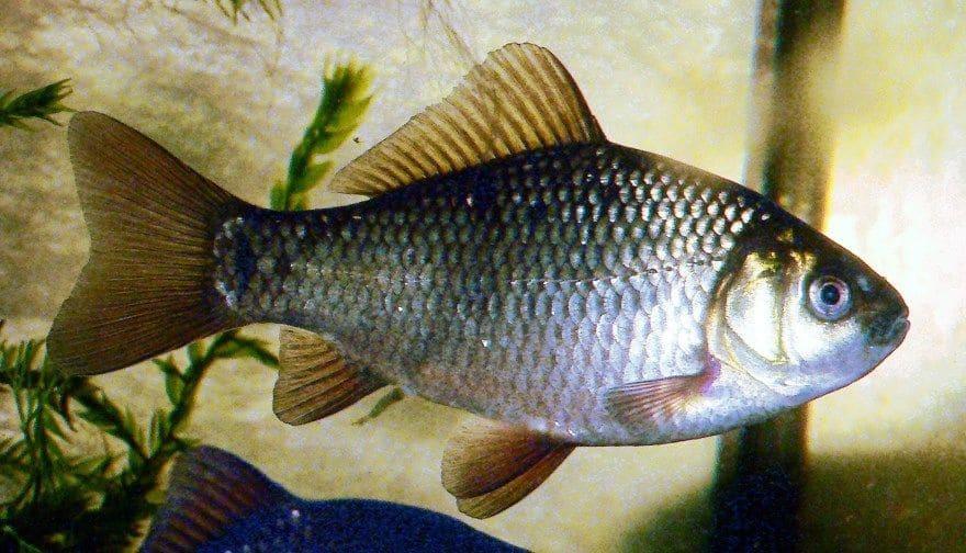 Рыба фото для детей