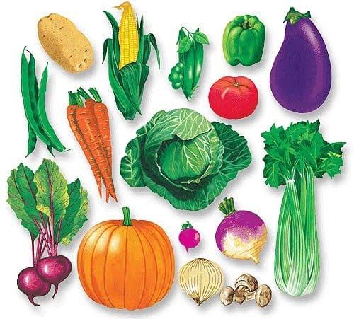 Овощи - фото для детей