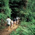 ブキ・ティマ自然保護区 Bukit Timah Nature Reserve