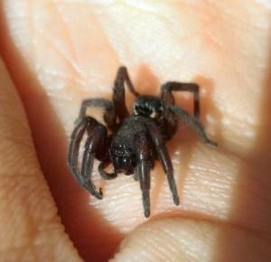 Arthropoda, Arachnida