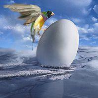 eggbird-s.jpg