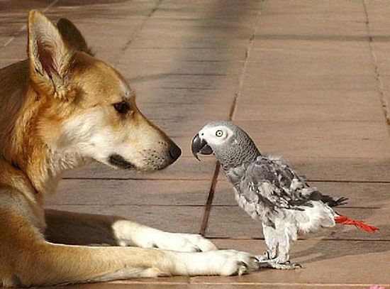 chien et perroquet