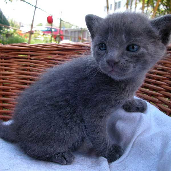 Chatons Donner Lasiate Poulitude