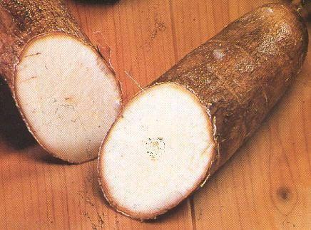 manioctubercule
