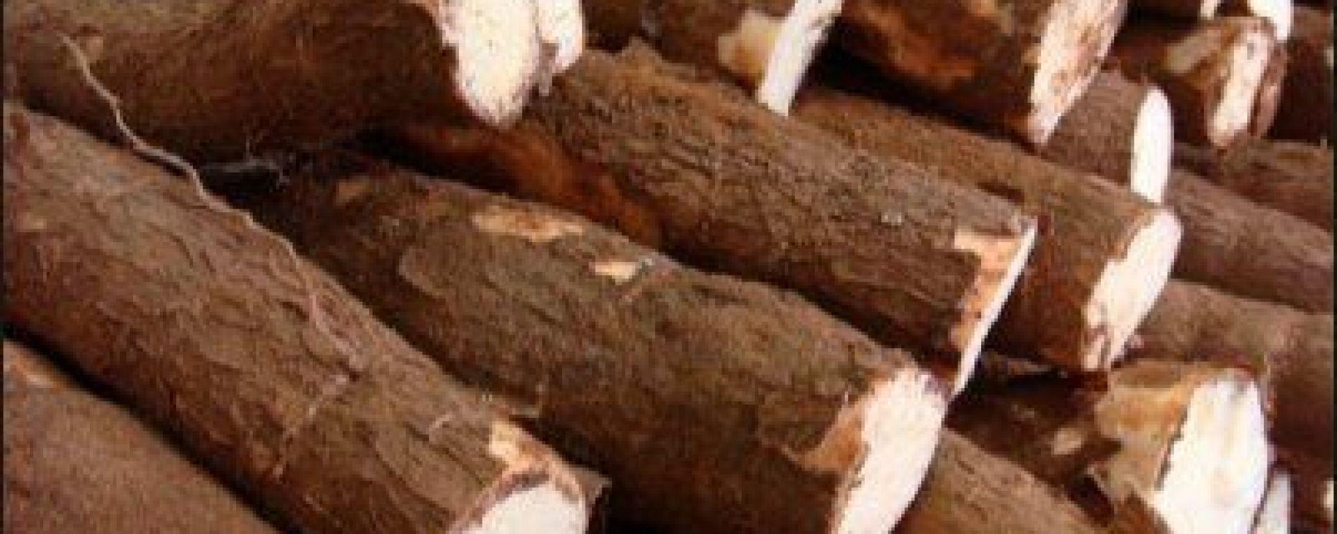 Tout sur la manioc!(Origine, conservation,préparation, consommation Comment Cuisiner Manioc on