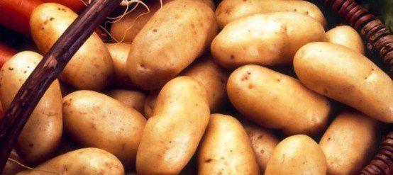pomme-de-terre-charlotte-bio.jpg
