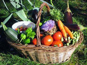 panier-legumes.jpg
