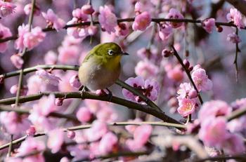 立春はいつ?【2020年版】 | ジャパノート -日本の文化と伝統を伝える ...