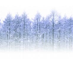 雪が降る森林の風景