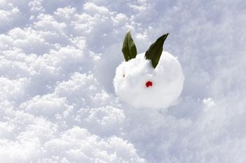 一匹の雪うさぎ
