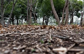 枯れ枝に覆われた地面