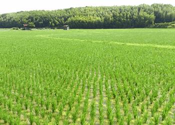 田園の風景