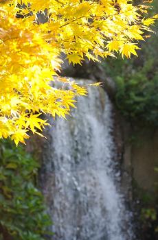 きれいな黄葉と滝