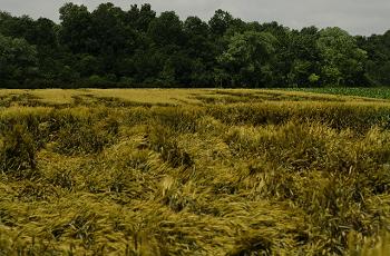 台風で荒れた野原